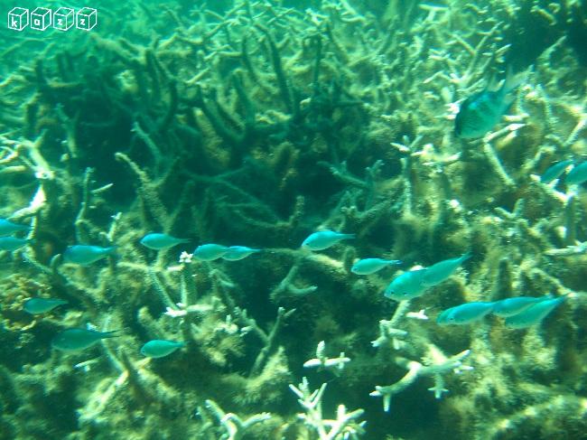 15.青い魚.jpg